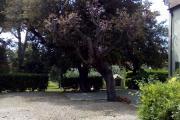 casa_quercianella_esterno_17.jpg